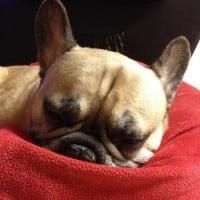Ruptured disk in dog