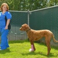 Happy Pets at Boundary Bay Veterinary Specialty Hospital