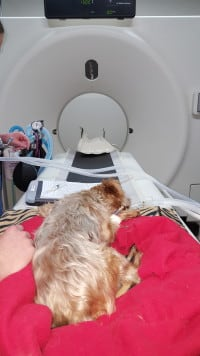 Dog CT Scan
