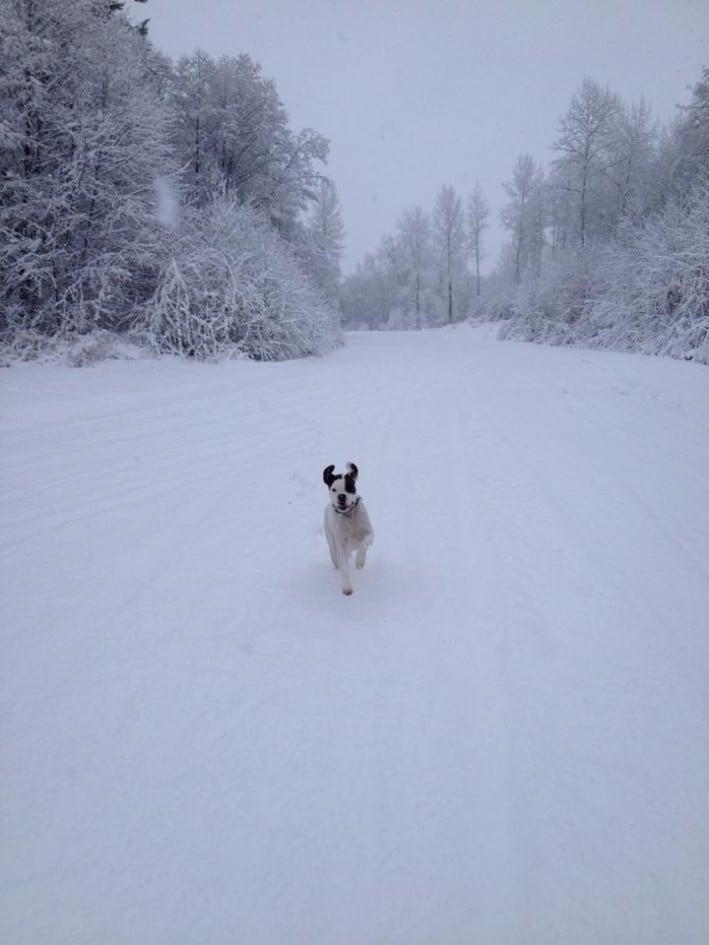 Gus snow 2