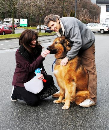 A dog's life - Dogwood Rescue volunteers Sandra Stavely (left) and Brenda Kay give Henrik a few treats.