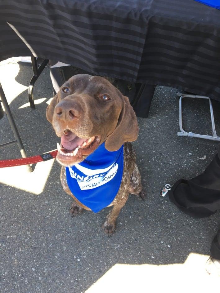 Boundary Bay Vet specialty hospital dog