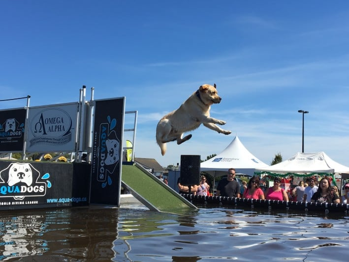 Dock diving Petapalooza 2016