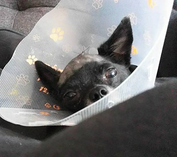 remy-post-surgery
