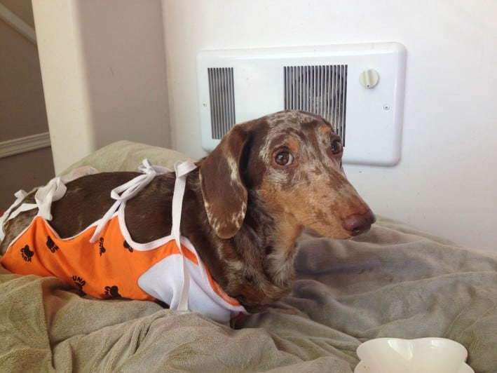 Splenic Mass Sarcoma Dog