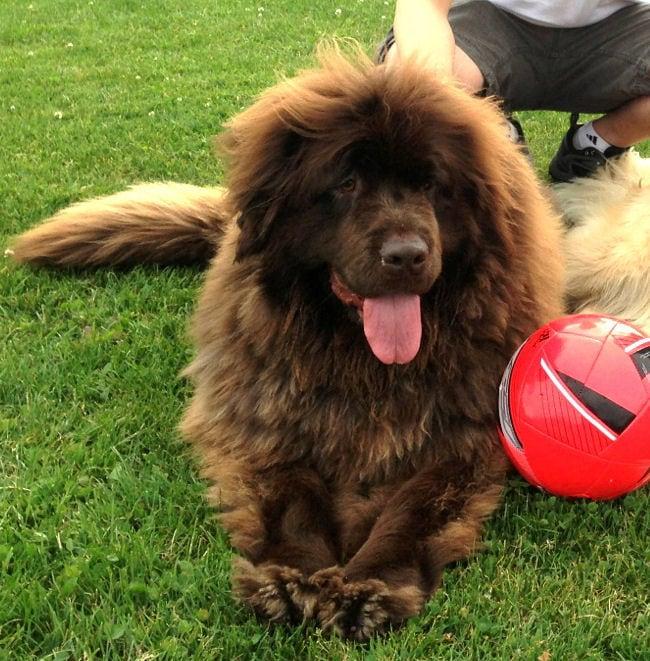 Canine TTA Surgery